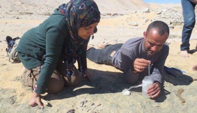 В Египте археологи обнаружили останки динозавра возрастом в 80 миллионов лет