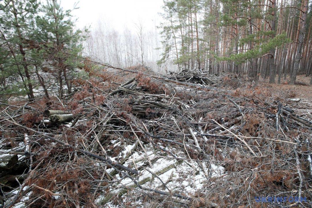 Вирубка лісу на території Сухолуччя // Фото: Павло Багмут, Укрінформ.