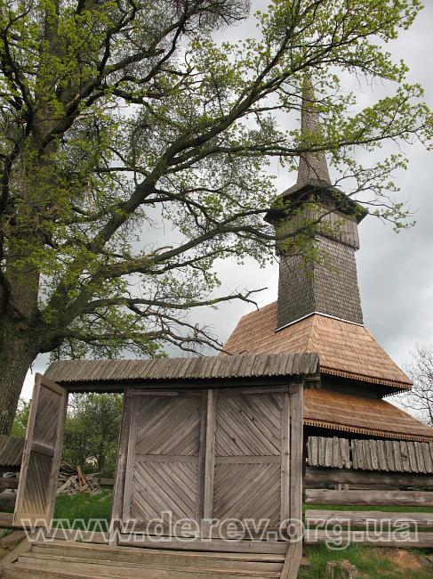 Фото: derev.org.ua