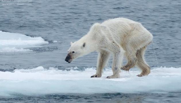 Aujourd'hui marque la Journée mondiale de l'ours polaire