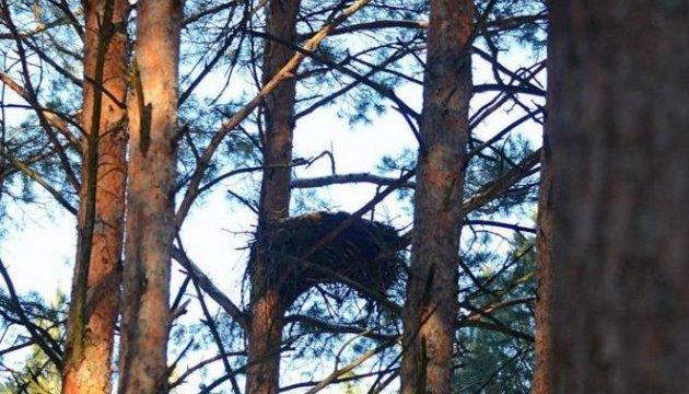 Ученые впервые провели исследование гнезд хищных птиц в зоне отчуждения