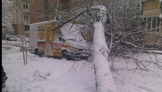 Снегопад повалил во Львове более 90 деревьев, повреждены восемь авто