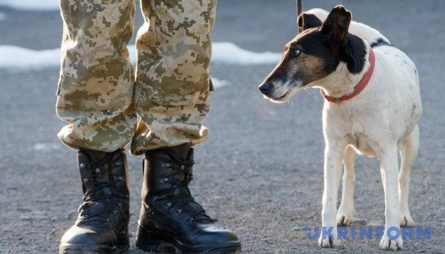 Высший пилотаж для пограничной собаки – вынюхать сигареты в бензиновом баке