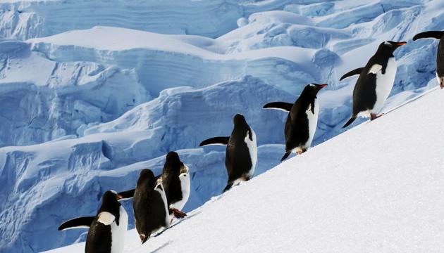 Вчені кажуть, що цьогорічна зима в Арктиці видалась напрочуд теплою