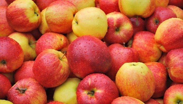 Exports of Ukrainian apples to the European Union increase ninefold