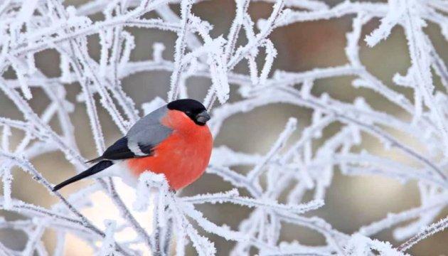 Погода на 16 лютого: до 3° тепла і невеликий сніг