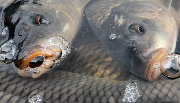 Збитки від загибелі риби в річці Уж оцінили більш як у 7 мільйонів