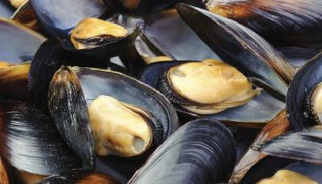 Monument to mussels to be installed in Vinnytsia region