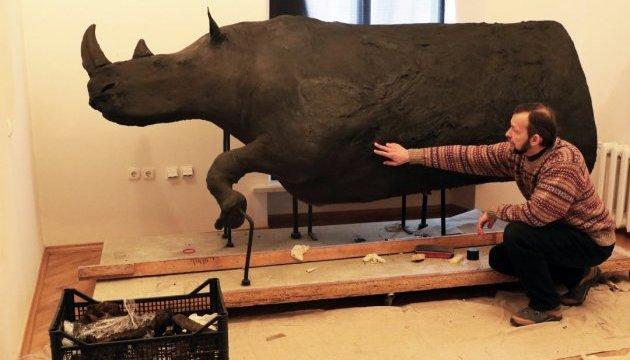 Львовский музей отреставрировал уникального волосатого носорога