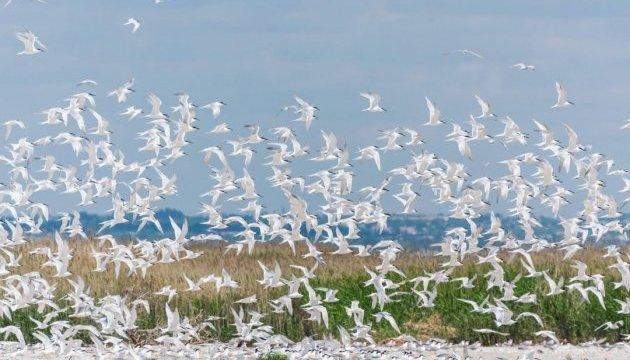 Національний парк «Меотида»: природа проти війни