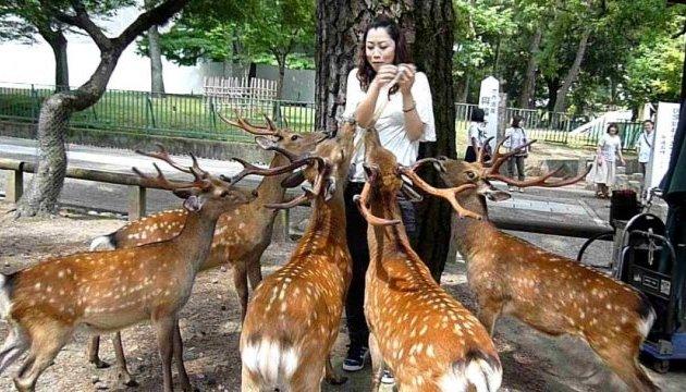 В японском парке олени кусают туристов-обманщиков