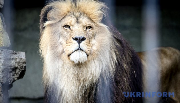Всесвітній день дикої природи / Фото: Укрінформ