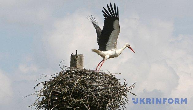 Международный день птиц. Фото: Укринформ