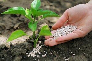 В этом году экспорт азотных удобрений превысил импорт на 63%