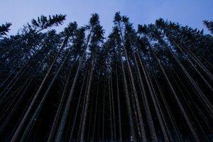 Закарпатские лесоводы зовут сажать деревья и выигрывать призы