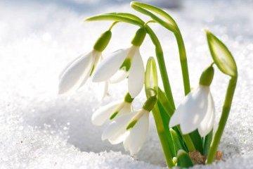 春姑娘终于来到乌克兰,一些地区温度达16摄氏度