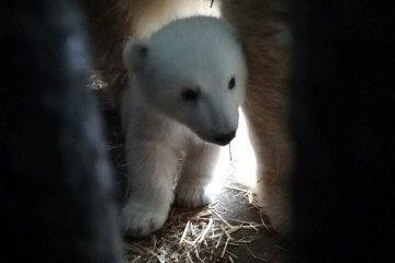 来自尼古拉耶夫的小白熊首次上镜