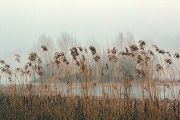 Украина в тумане: синоптики прогнозируют холодные ночи и теплые дни