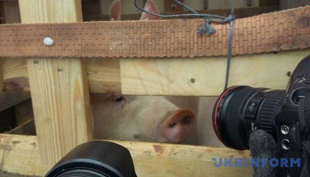 Під Кабмін привезли свиней і солому