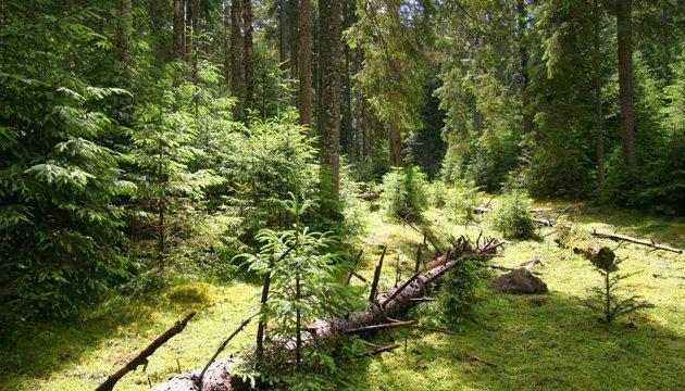 Гослесагентство опровергает фейк о передаче лесов в концессию
