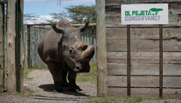 Умер последний в мире самец северного белого носорога