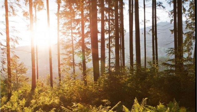 Am 21. März ist der internationale Tag des Waldes