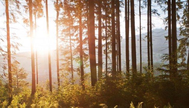 El 21 de marzo el mundo celebra el Día Internacional de los Bosques