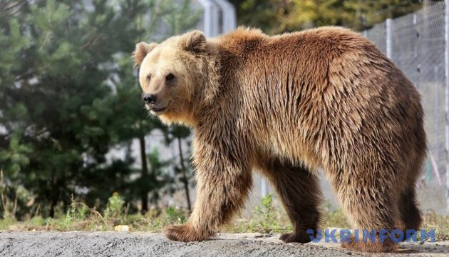 Медвежий приют и нацпарк предложат туристам прогулки по Расточью