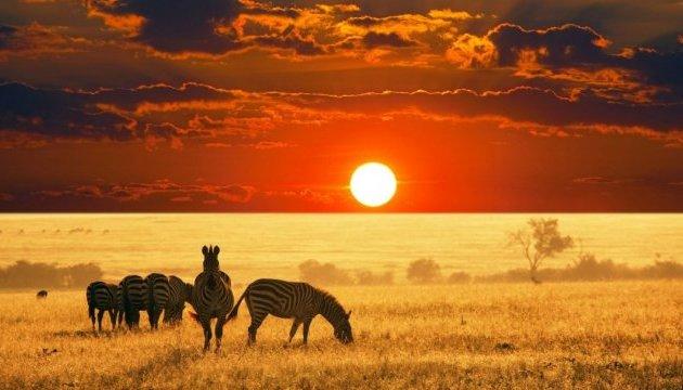 До кінця століття в Африці вимре половина видів тварин – ООН