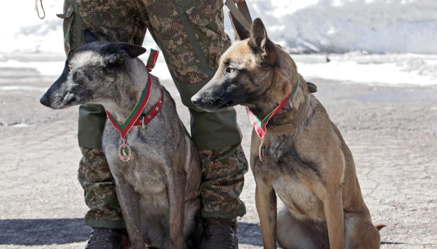 У МВС для пошуку осіб з COVID-19 хочуть задіяти собак