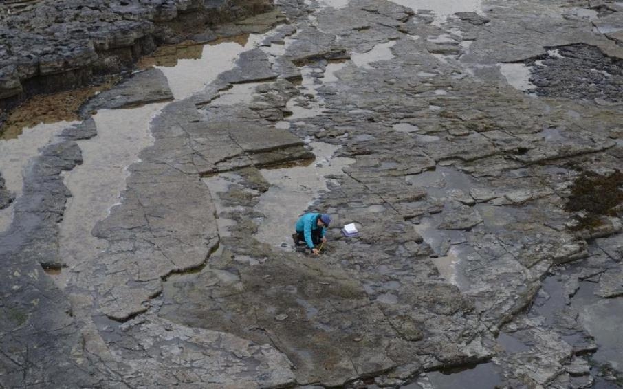 ВШотландии отыскали следы крупнейшего вмире динозавра