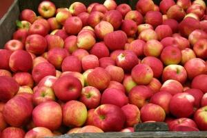 Яблочный сезон в Украине начался позже и высокими ценами