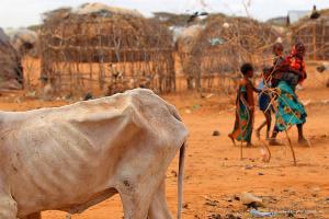 Голод из-за пандемии может убить больше людей, чем коронавирус - Oxfam