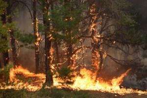 На Прикарпатті гасять три лісові пожежі