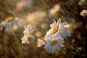 """Українцям обіцяють іще майже тиждень """"мокрої"""" погоди"""