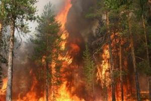 У Росії зросла площа лісових пожеж