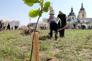 В Украине миллион человек планируют высадить за день миллион деревьев
