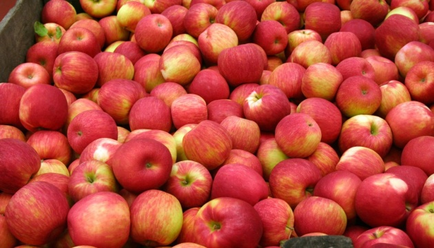 Indian company looking for Ukrainian producers of apples