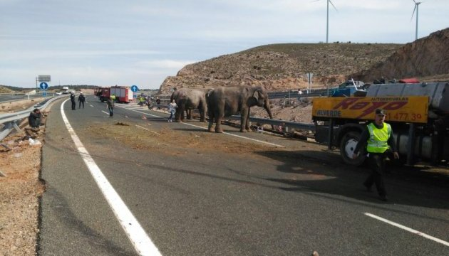 В Іспанії у ДТП потрапила вантажівка зі слонами, одна тварина загинула