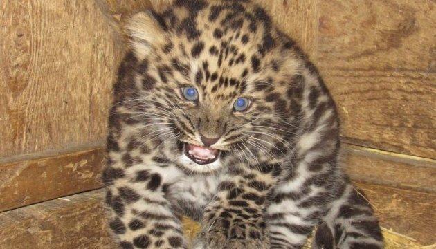 Миколаївський зоопарк кличе на хижий бебі-бум