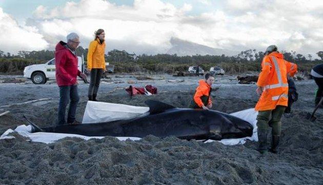 У Новій Зеландії близько сорока дельфінів викинулися на берег