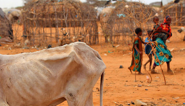 Кожна дев'ята людина у світі страждає від голоду – ООН