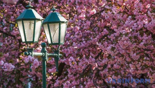 桜で知られるザカルパッチャ州ムカチェヴォ市、花見祭り開催へ