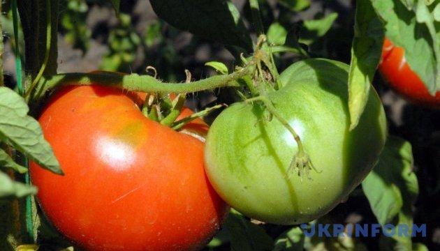На Херсонщине в этом году лидерами по урожайности будут морковь и помидоры - фермер