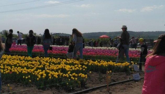 До Буковини на фестиваль тюльпанів з'їхалися тисячі туристів