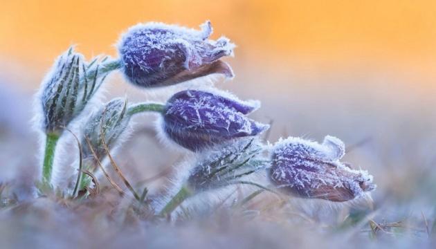 В Україні у вівторок без опадів, вдень прогріє до +20°
