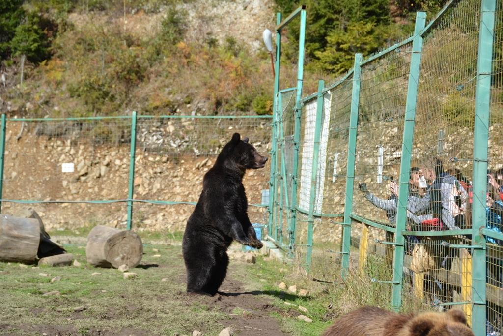 """Парк """"Синевир"""" запрошує в гості до бурих ведмедів"""
