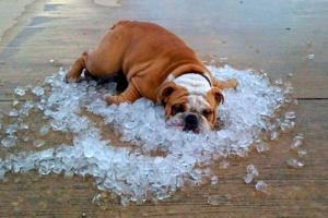 Нідерланди теж накриє 40-градусна спека