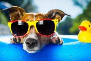 Kyiv sets new temperature record on June 23