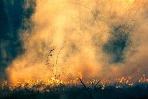 В Чернобыльской зоне горит 5 гектаров травы